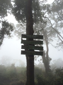 Finally, Puncak 1 of Gunung Salak at 2,210m